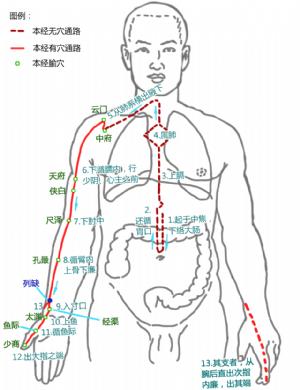列缺在手太陰肺經中的位置