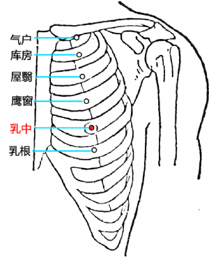 乳中穴的位置