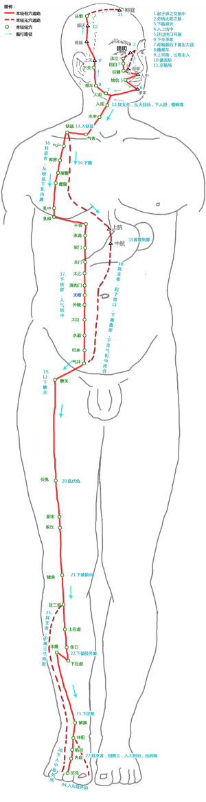 天枢穴在足阳明胃经中的位置