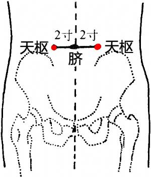 天枢穴的位置——脐旁2寸.png