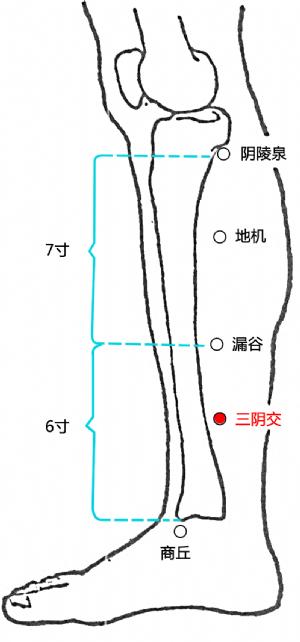 三阴交穴的位置
