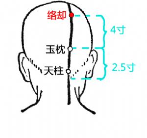 络却穴在头部的位置2.png