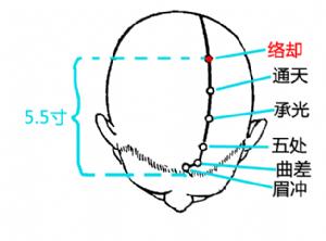 络却穴在头部的位置.png