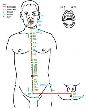 会阴穴在任脉的位置.png