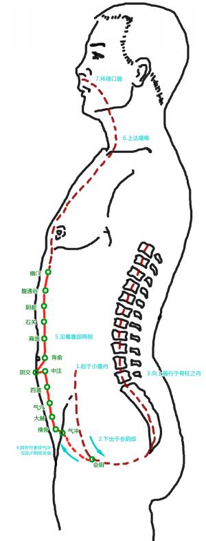 衝脈循行路徑