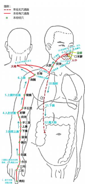 手陽明大腸經循行路線及經穴