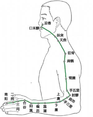 手陽明大腸經腧穴總覽